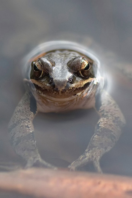 Grenouille_1_filtered